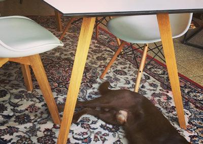 Möbeltante - Tisch - Esstisch - Modern